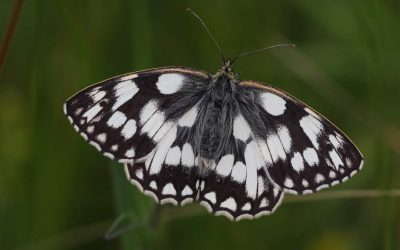 Outdoor Meeting: Butterflies and Insect Walk