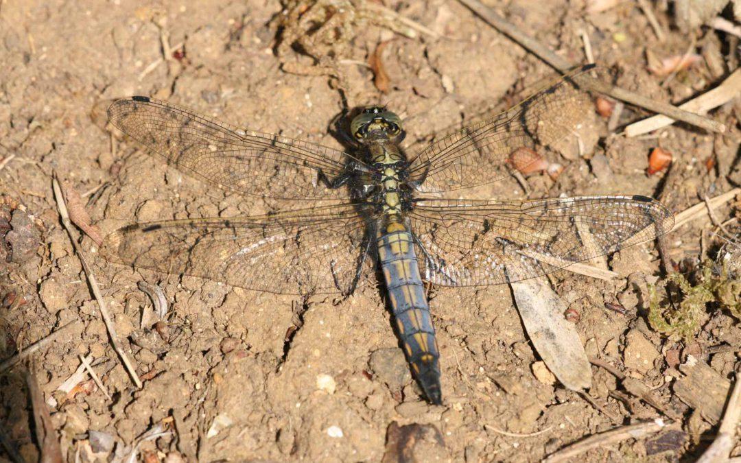 Outdoor Meeting: Cossington Meadows Nature Reserve
