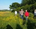 Farm-Walk7