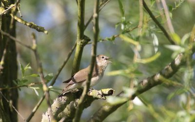 Outdoor Meeting: Migrant birds of Tunnely Wood: This meeting has been cancelled