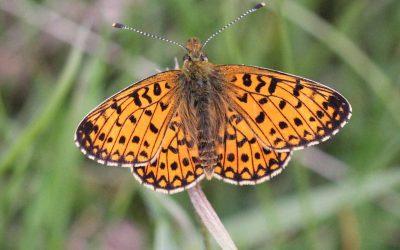 Rutland Natural History Society proposed Yorkshire Tour